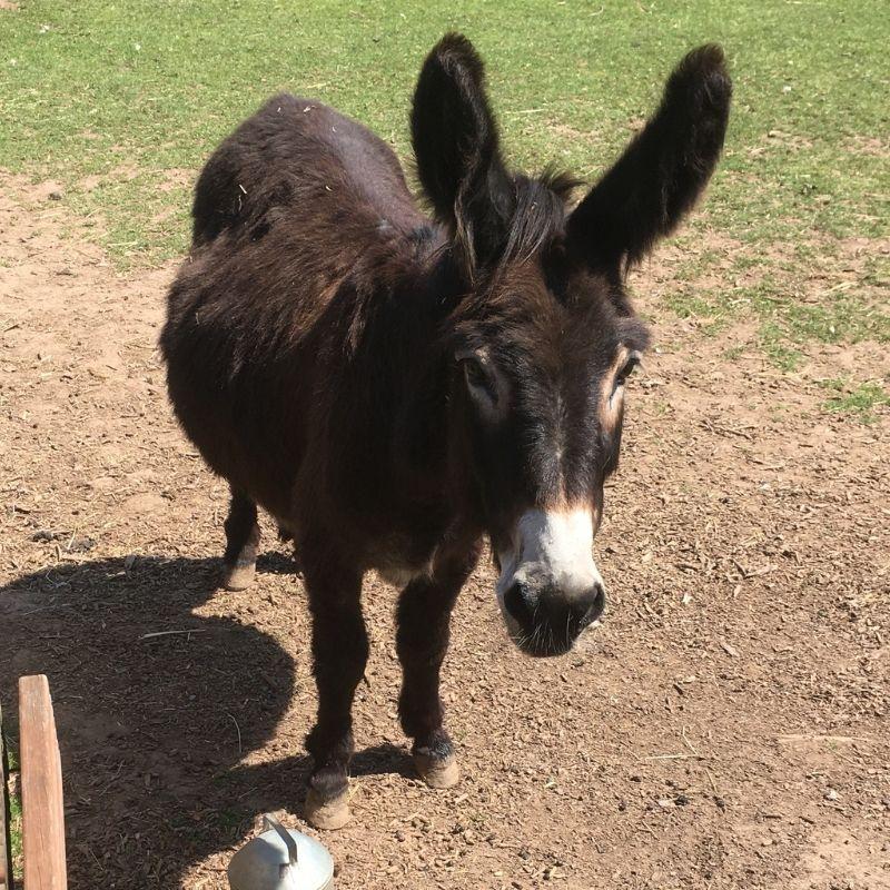 Penny the Donkey